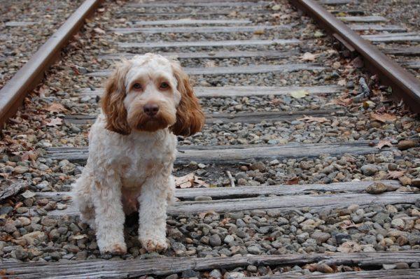 cane abbandonato1
