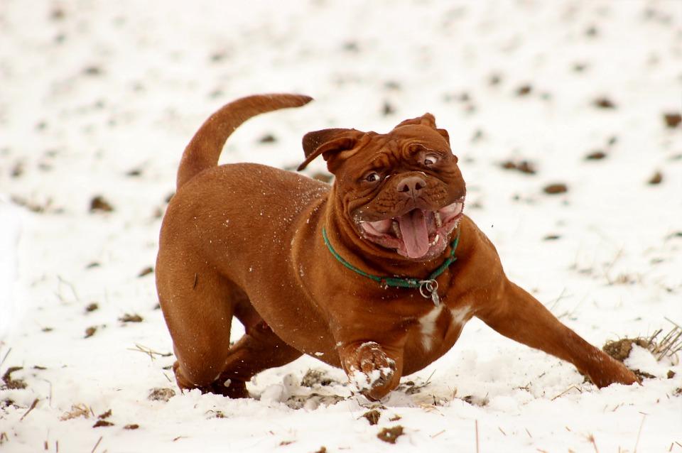 cane-che-gioca-sulla-neve