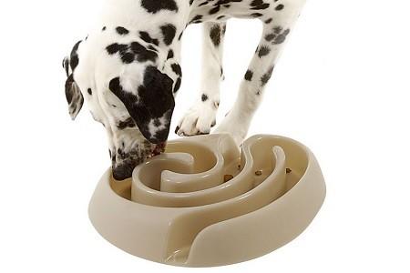 cane-mangia-in-fretta-come-fare