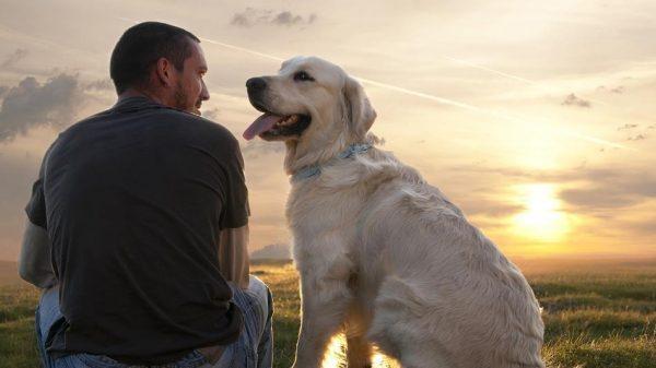 Avvicinarsi al cane