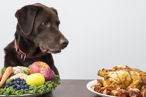 Alimentazione vegetariana nel cane