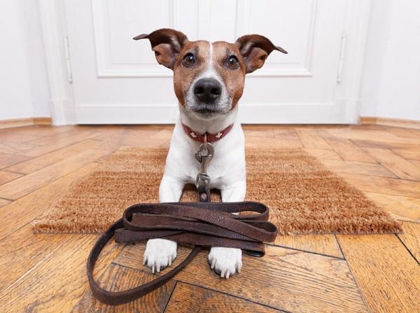 """Insegnare il comando """"resta"""" al cane"""