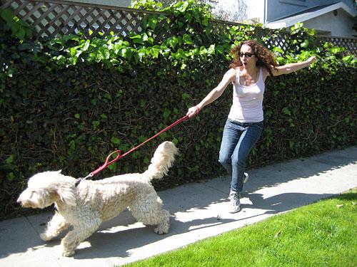 Il cane tira al guinzaglio