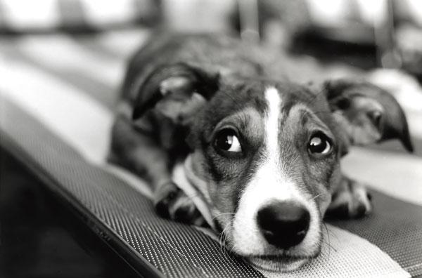 il cane ha paura