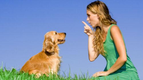 """Insegnare al cane il """"seduto!"""""""