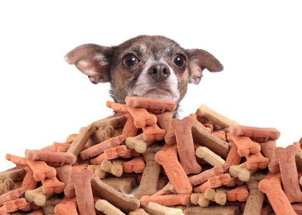 I cani nascondono il cibo