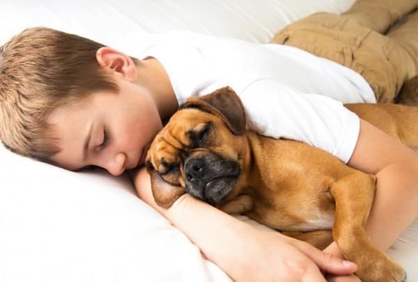 I cani ci dimostrano affetto