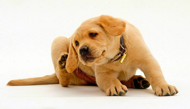Allergie nel cane
