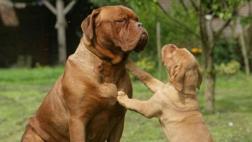 Sviluppo fisico del cane