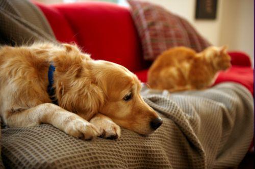 Gravidanza isterica del cane