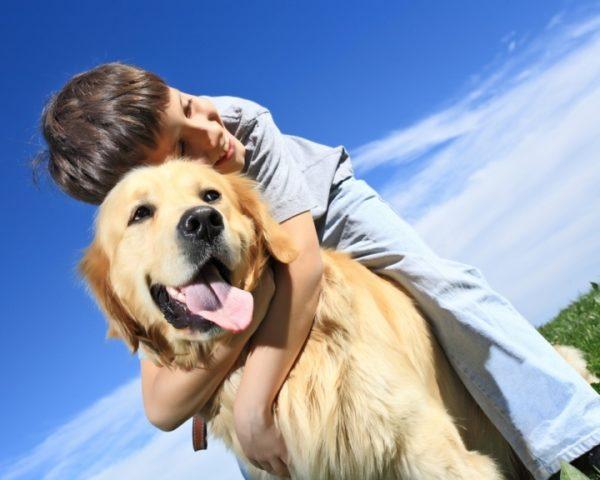 I cani odiano