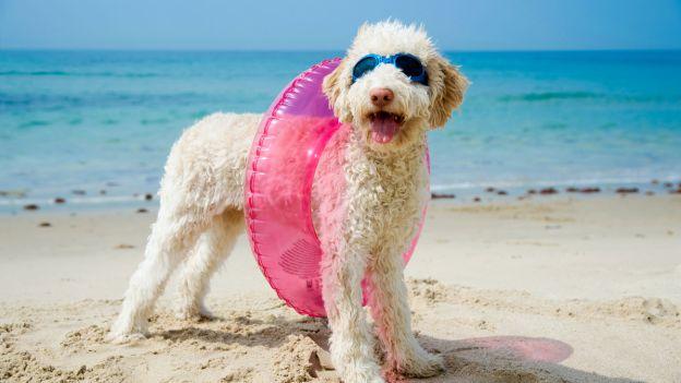 Vacanza col cane