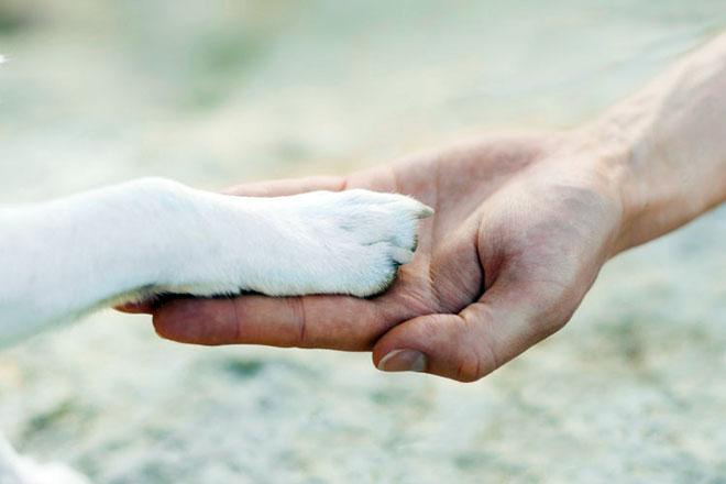 I cani danno la zampa