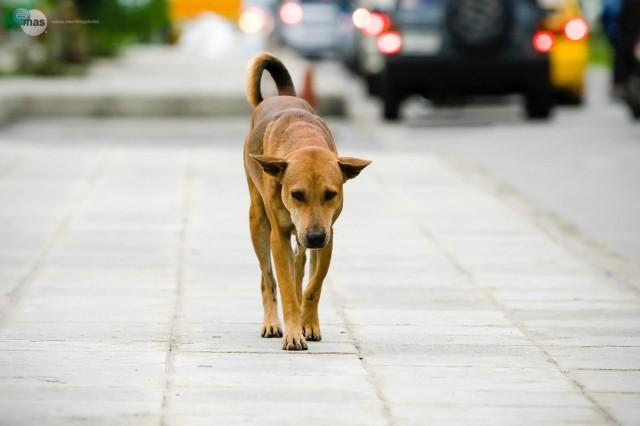 Maltrattamento sui cani