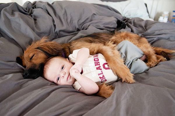 Sonno nel cane