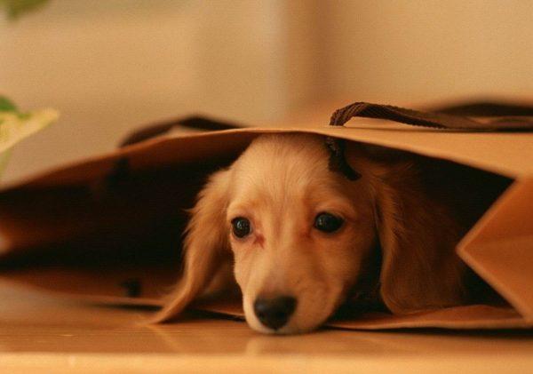 I cani hanno paura del temporale