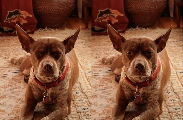 Clonare il cane