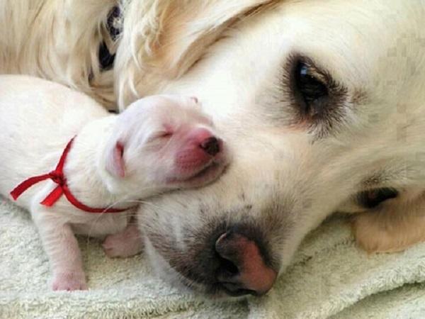 Togliere il cucciolo alla madre