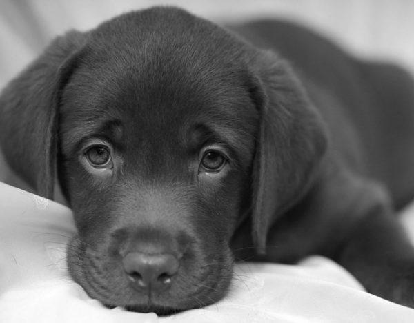 Agopuntura sui cani