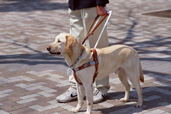 Cani guida per non vedenti