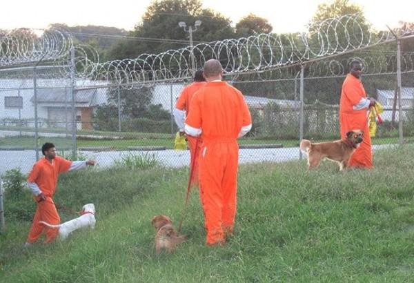 Cani in carcere