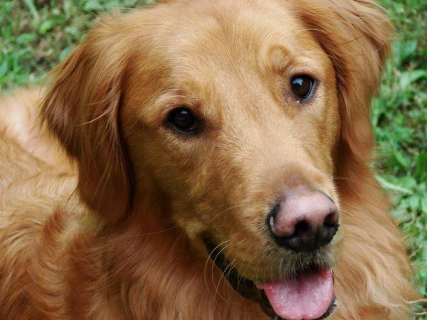 Naso del cane