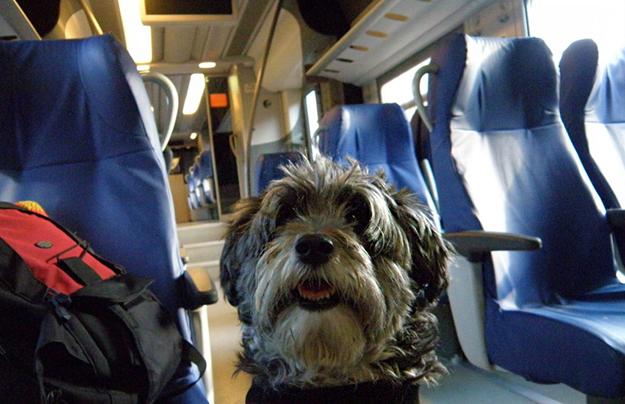 Viaggiare in aereo con il cane