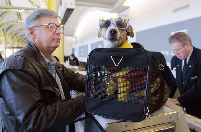 Viaggiare in aereo con il cane1