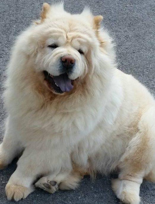cachorrita belle1