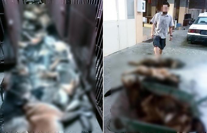 cani anti-bomba uccisi