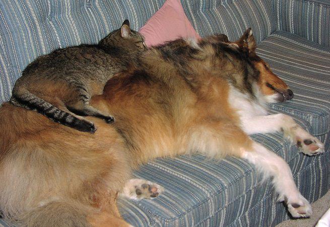 Chiude in casa cane e gatto