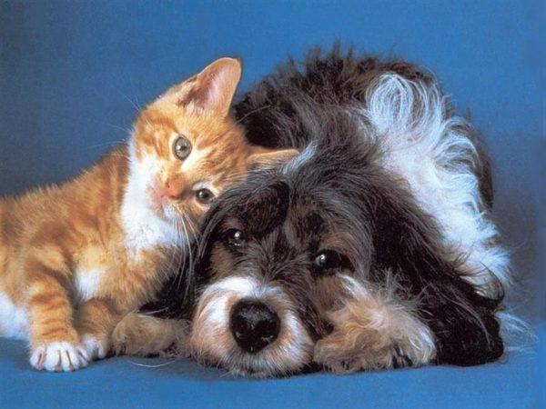 Préférence Cani e gatti insieme: come farli convivere | Razzedicani.net EA67