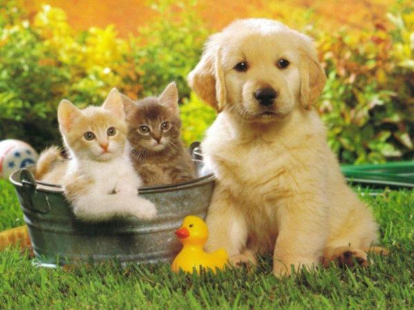 cani e gatti si odiano