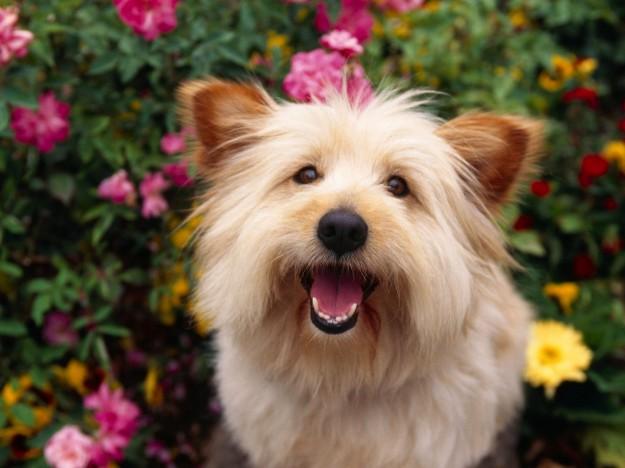 espressioni del cane