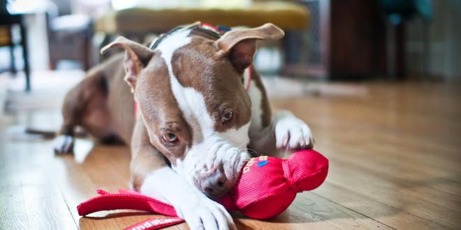 giochi pericolosi per i cani