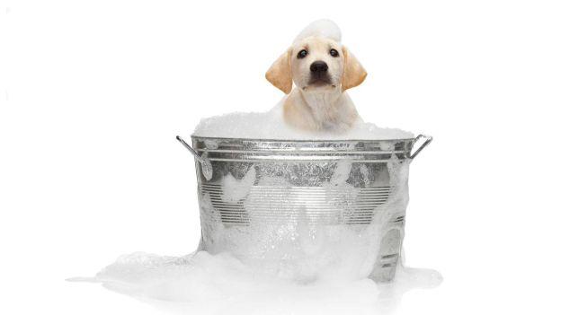 i cani odiano fare il bagno