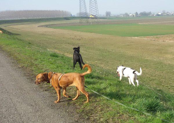 i cani si rotolano a terra