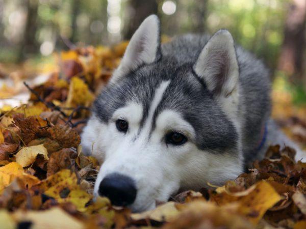 malattie respiratorie nel cane