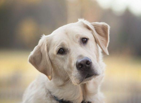 malattie respiratorie nel cane1