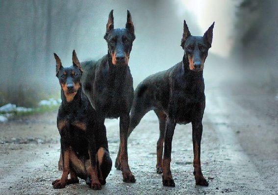 razze di cani pericolose