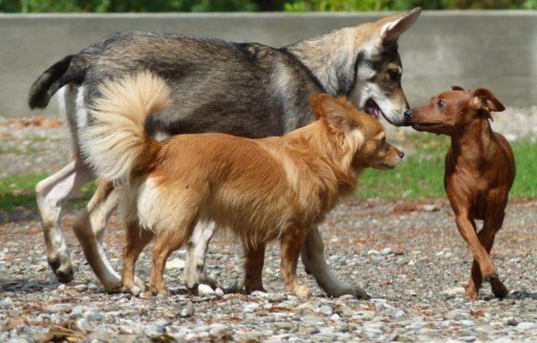 segnali calmanti nel cane