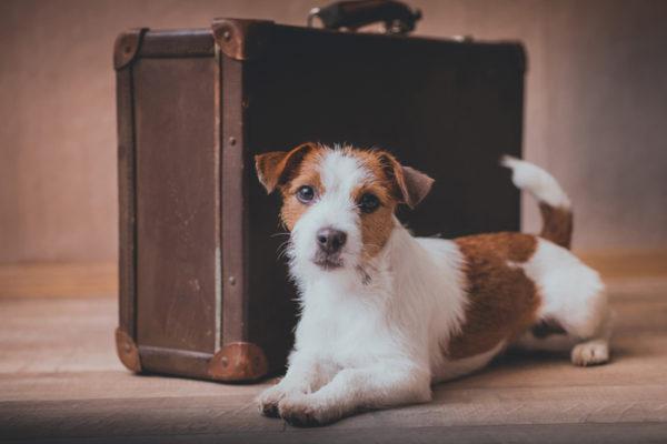 traslocare con il cane