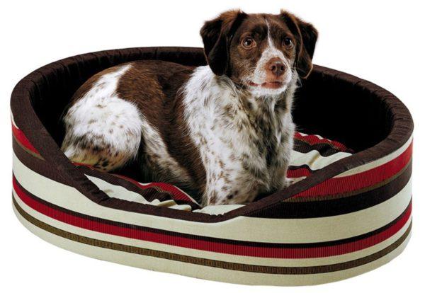 accessori per cuccioli di cane