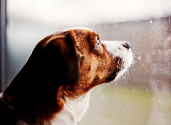 cane salva il padrone