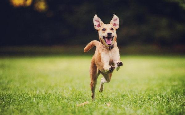 cane è felice