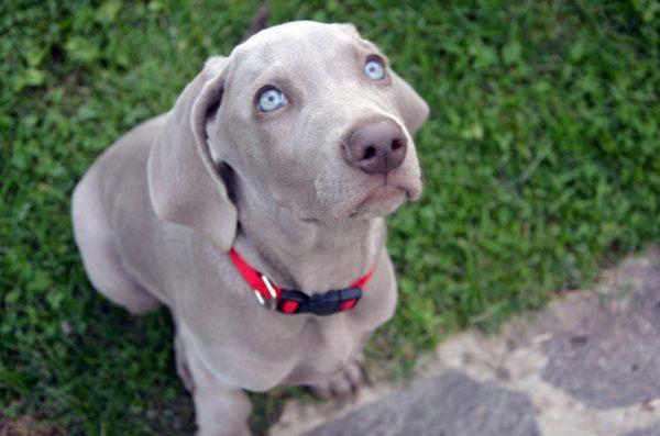 """cani """"fiutano"""" le bugie"""