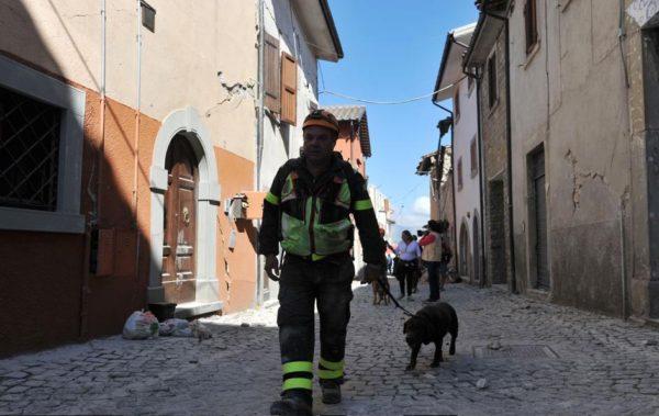 cani hanno salvato una bimba