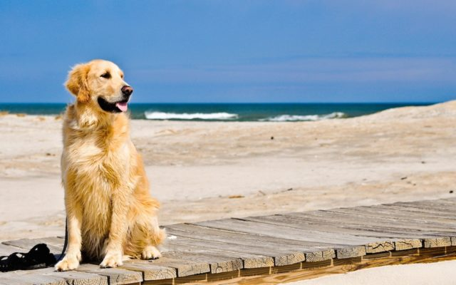 i cani in spiaggia