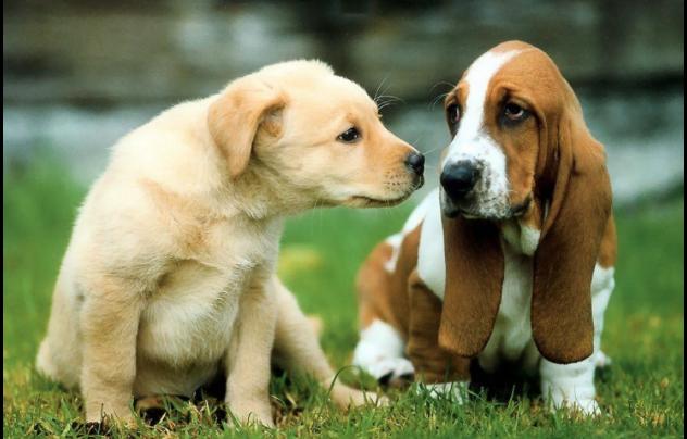 cani si riconoscono tra loro
