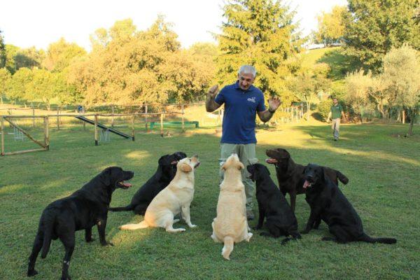 classi di socializzazione per cani